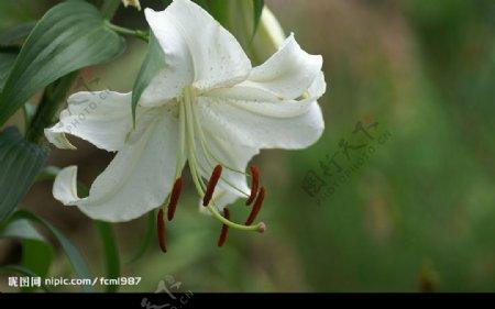 自然风景摄影图库图片