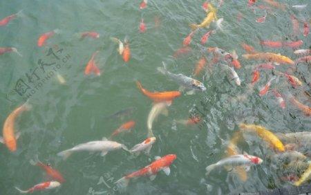 小鱼儿图片