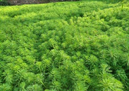 青草绿色植物
