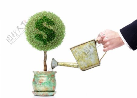 灌溉金钱树