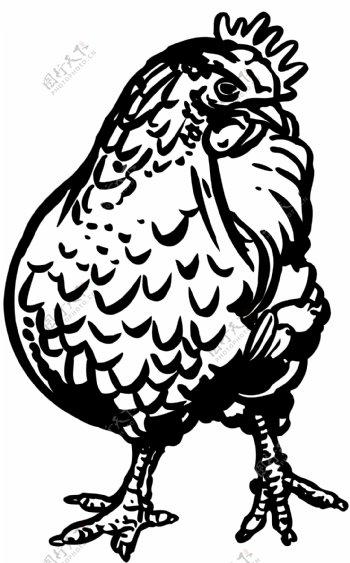 鸡家禽家畜矢量素材eps格式0172