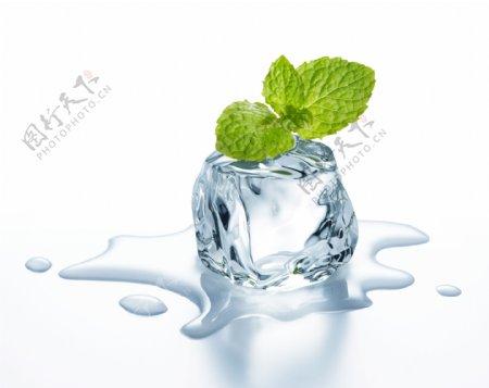 冰块上的薄荷叶子高清图片下载