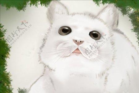 手绘小猫动漫动画