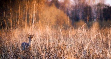 深秋时节的草原风景