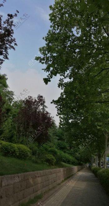 云下的绿荫路