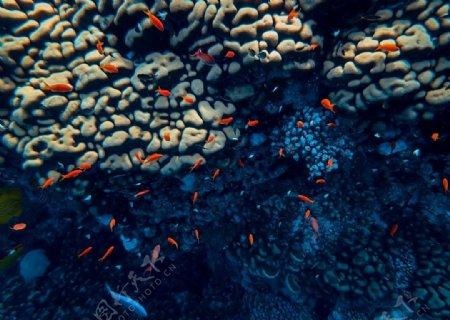 海底红色小鱼儿