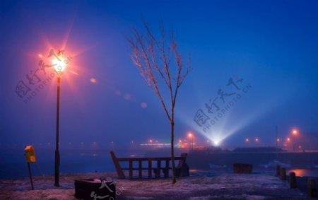 夜晚树木与闪耀的灯光