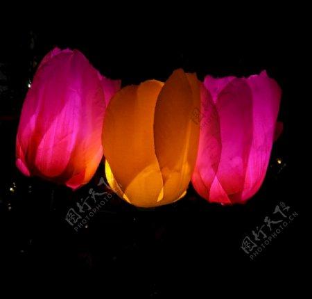 玫瑰花灯节日庆祝夜景花卉