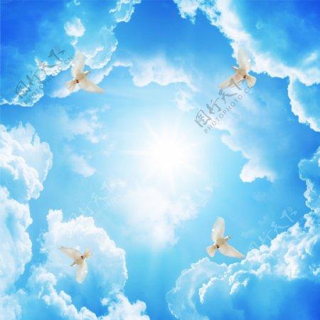蓝天白云白鸽吊顶天花