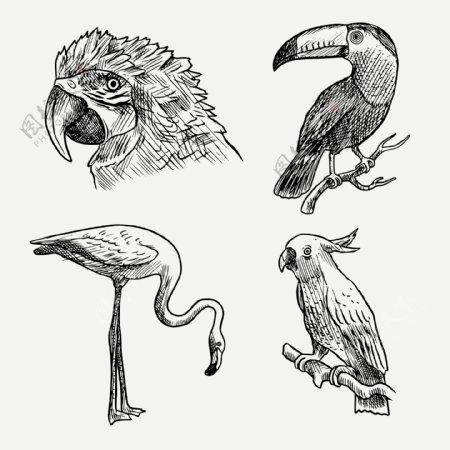 4款逼真手绘鸟类设计矢量图