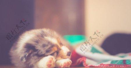 治愈宠物狗狗睡觉