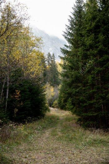 森林树木道路小路梦幻背景素材