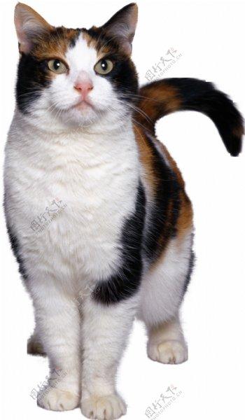 猫宠物猫宠物小猫猫咪