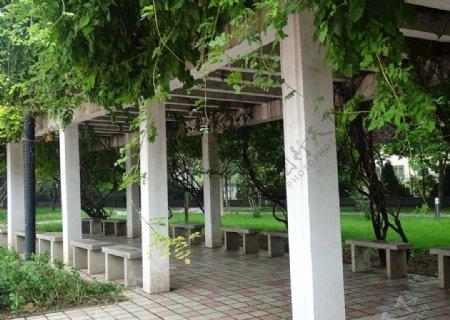 绿荫下的小亭