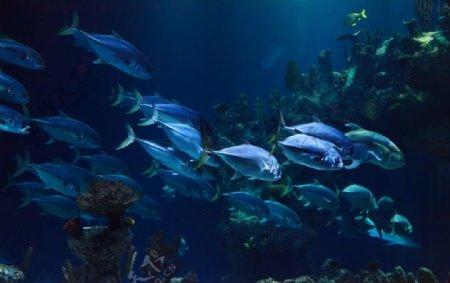 鱼海洋水族馆