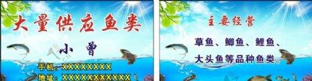 大量供应鱼类名片