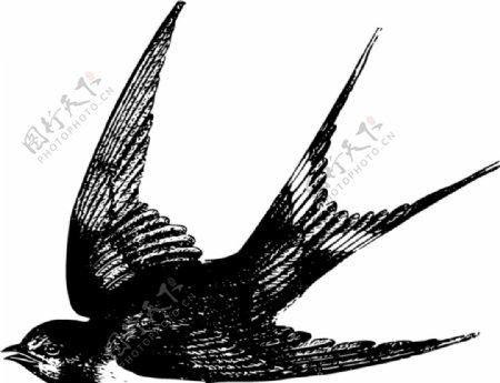 燕子矢量插图图片