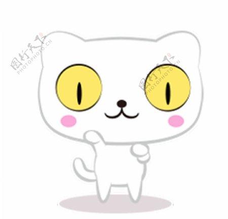 猫呆呆萌猫大眼猫小猫猫咪