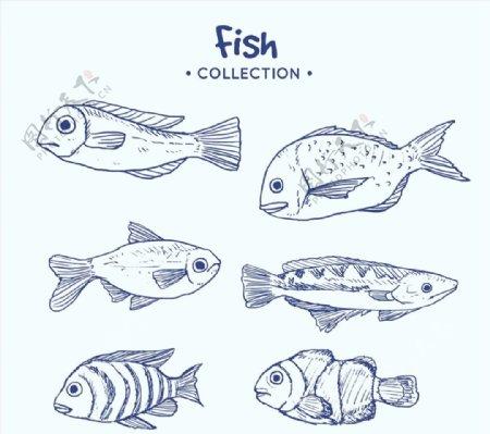 蓝色手绘海洋鱼类图片