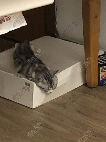 猫猫虫图片