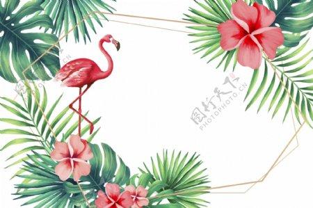 火烈鸟植物花卉背景图片
