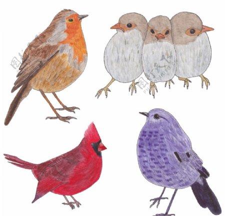 手绘鸟类图片
