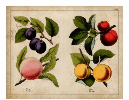 美式桃子水果复古装饰画图片