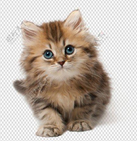 小猫猫小老虎可爱猫咪图片