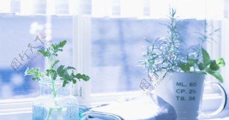 窗台杯子植物唯美浅蓝图片