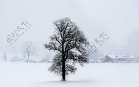 冬季风雪中孤独的大树图片
