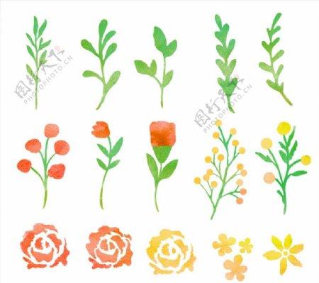 水彩花卉和叶子图片