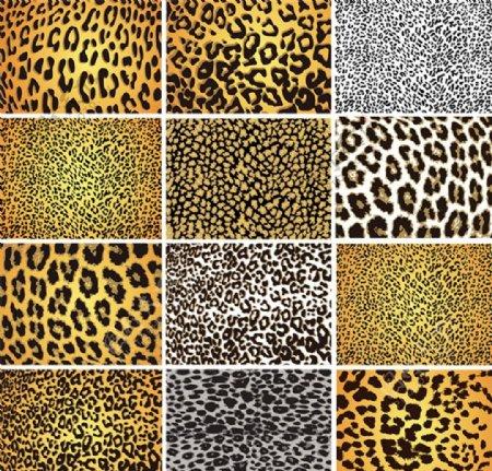 动物毛皮花纹背景图片