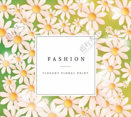 白色雏菊花朵卡片图片
