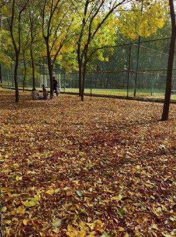 秋天枫树林枫树树林图片