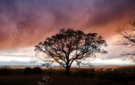 日落野外树木剪影图片