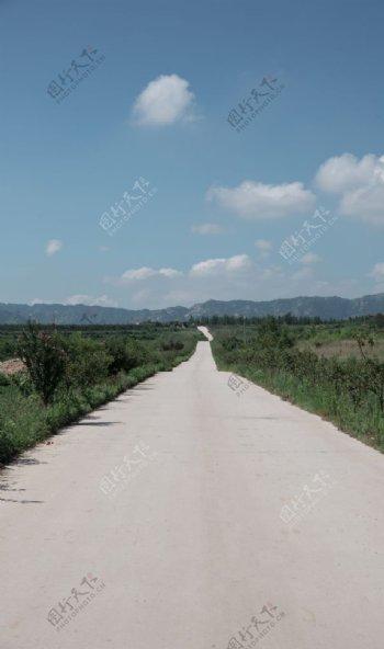 蓝天白云大树道路图片
