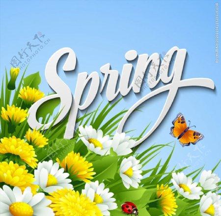 春天雏菊花丛图片