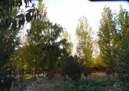 大树小树图片