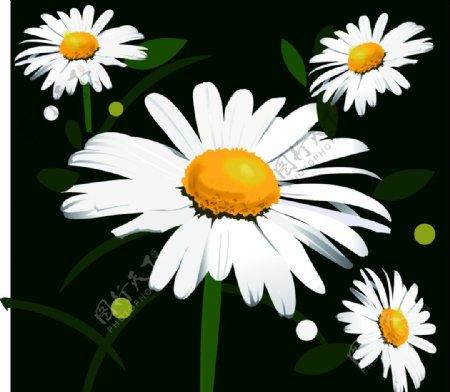 温暖的小雏菊图片