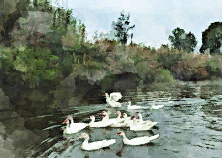 大白鹅湖泊自然风景图图片