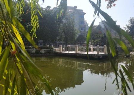 公园湖边柳树图片