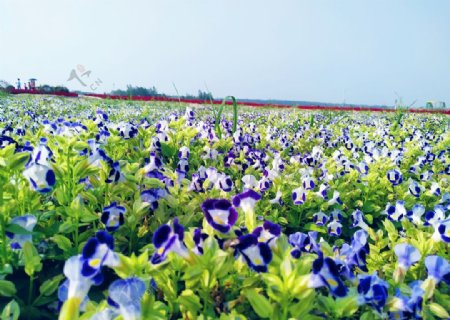 花知系列私语兰花的恰恰私语图片
