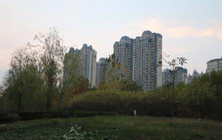 公园草地高楼图片