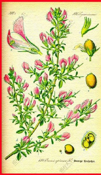 手绘红花绿叶果实图片