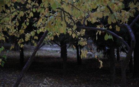 恐怖树林图片