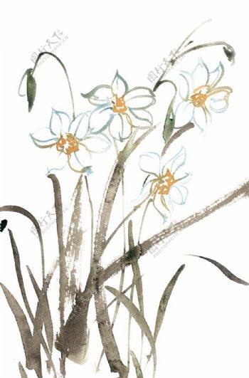 水墨画水仙花图片