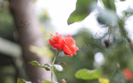 江西帝姑年糕厂花瓣开花了图片