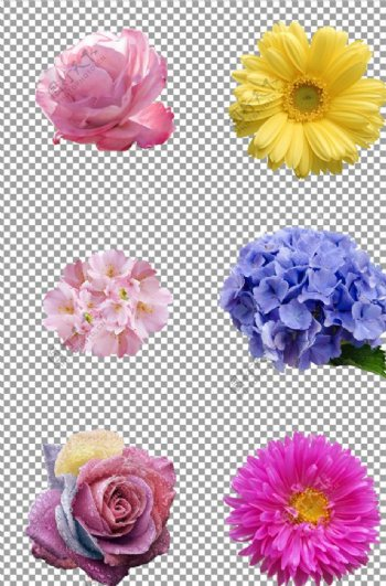 美丽漂亮可爱的花朵图片