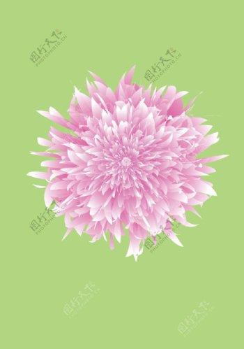 牡丹花矢量素材图片