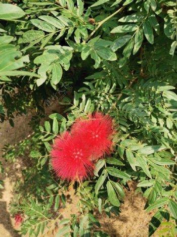 小红花图片